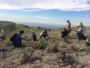 2016-02-13_Adopt a Grassland West Loma Stewardship_Limetone Canyon Nature Preserve-2