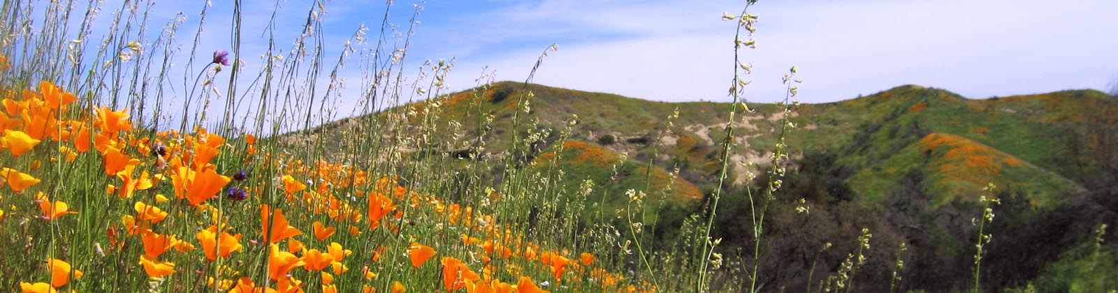 CANCELLED: Wildflowers & Pollinators: Walking Tour of the Native Seed Farm