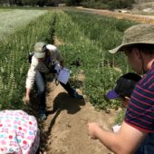 Wildflowers & Pollinators: A Backstage Pass at the Native Seed Farm